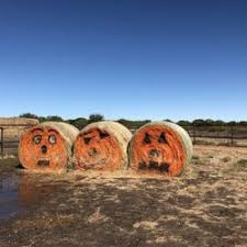 Celina Pumpkin Patch Directions by Preston Trail Farms 52 Photos U0026 20 Reviews Attraction Farms