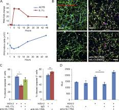 Herpes Viral Shedding Over Time by Keratinocytes Produce Il 17c To Protect Peripheral Nervous Systems