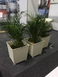 golden palm in pots golden palms white pots lng 2 mr pot plants