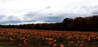 Pumpkin Patch Ct by Linda Dibella Get Real 4 Health