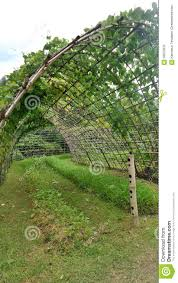 Green Vine Tunnel To Backyard Garden Stock Photo - Image: 58675876 Install Bamboo Fence Roll Peiranos Fences Perfect Landscape Design Irrigation Blg Environmental Filebamboo Growing In Backyard Of New Jersey Gardener Springtime Using In Landscaping With Stone Small Square Foot Backyard Vegetable Garden Ideas Wood Raised Danger Garden Green Privacy For Your Decorative All Home Solutions Spiring And Patio Small Square Foot Vegetable Gardens Oriental Decoration How To Customize Outdoor Areas Privacy Screens