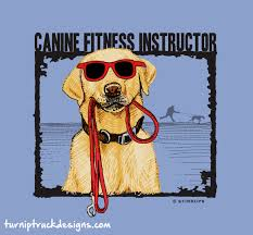 Canine Fitness Instructor - Dog Lover T-shirt From Turnip Truck ... 8 Best Beer Season Images On Pinterest Truck And Trucks Falling Off The Turnip Tuesday Tip The Schulz Blog 1768156 Artistannon Big Breasts Bimbo Busty Scitwi A Kiss For Lizzie Tayloe Letter Collection Shell Twitter Truth Is I Feared For My Life Read How Newsletters Page 3 Quilts From Casa Nana She Did Fall Off Turnip Truck Hornswoggled Welcome To Gerald Missourah Town That Did Just Amazoncom Slate Grey Religious Sign Saying Didnt Jericho Settlers Farm Inc Because You Didnt Just Fall Instructional