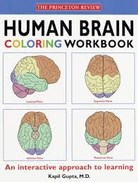 Human Brain Coloring Book Colouring In