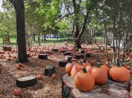 Where Did Pumpkin Patch Originate by Pumpkin Patch And Petting Zoo Come To The Park Ibpac