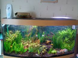 juwel aquarium vision 260 juwel aquarium vision 260 complete offers at aquarist classifieds