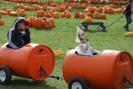 Central Illinois Pumpkin Patches by Scary Good Growing Season Makes For Magical Pumpkins Local