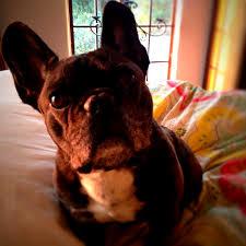 Libbys Pure Pumpkin For Dogs by Vegan Pumpkin Peanut Butter U0026 Rolled Oats Dog Treats Delightful