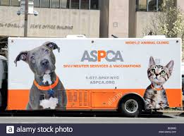 ASPCA The American Society For The Prevention Of Cruelty To ... 10 Awesome Places To Adopt A Dog Or Cat In Nyc Adopt Pet Hells Kitsch New York Today The Lunar Year Laundromat News Aspca Car Seat Cover For Dogs Walmartcom Home Aspcapro Worlds Most Recently Posted Photos Of Aspca And Nyc Flickr Spca Wchester County Mobile Animal Clinic Brooklyn City Bring Cat Free From The Aspcas Friday Adoption 25 Best Memes About Narcotics