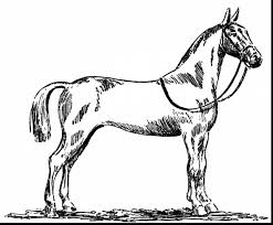 Great Horse Coloring Pages With Free And Carousel