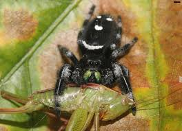 Remains Of The Day Spiders by Spiders Eat 400 800 Million Tons Of Prey Every Year