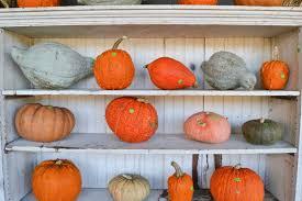 Pumpkin Patch Massachusetts best of mass pumpkin patches top 5 rankings winner announced