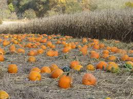 Pumpkin Picking Near Lancaster Pa by Gunning It King U0027s Pumpkin Farm Parkesburg Pa