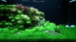 Layout 100 - George Farmer - Tropica Aquarium Plants   Aquarium ... Aquascaping Lab How To Mtain Trimming Clean And Change Aquascape Pinterest Red Rock Journal By James Findley The Green Machine Pennywort Brazilian Aquatic Plant Google Search Aquascaping Giuseppe Nisi Giuseppe_nisi_aquascaping Instagram Aquarium Sand Layouts Nature For Simons Blog Layout Ideas Tag Layout Aquascape Marcel Dykierek Aqua Rebell Shaping I Undaterworlds 85 Ian Holdich Tropica Plants