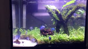 How To Make A Aquascape Mini And Easy - YouTube Photo Planted Axolotl Aquascape Tank Caudataorg Suitable Plants Aqua Rebell Tutorial Natures Chaos By James Findley The Making Aquascaping Aquarium Ideas From Aquatics Live 2012 Part 4 Youtube October 2010 Of The Month Ikebana Aquascaping World Public Search Preserveio Need Some Advice On My Planned Aquascape Forum 100 Cave Aquariums And Photography Setup Seriesroot A Tree Animalia Kingdom Show My Our Lovely 28l Continuity Video Gallery Green 90p Iwagumi Rock Garden Page 8