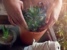 diese pflanzen solltest du im schlafzimmer haben wunderweib