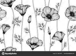 Seamless California Poppy Flower Pattern Background Black White Drawing Line Stock Vector