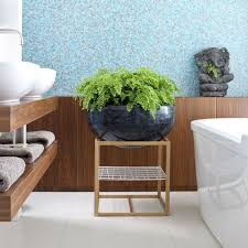 Best Bathroom Pot Plants by 14 Places To Use Indoor Air Purifying Plants Decorated Life