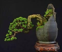 9 best bonsai pots images on plants atrium and bonsai