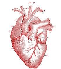 25 Unique Heart Ideas On Pinterest