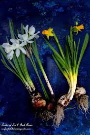 easy gardening tip planting and bulbs here s how to