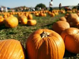 Tapia Brothers Pumpkin Patch by 5 Places To Pick Your Perfect Pumpkin In La Locale Magazine