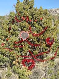 Up In The Mountains Above Laughlin Is Christmas Tree Pass Early Miners Would Hang Their Empty Food Cans On Bushes Outside Caves A Dea