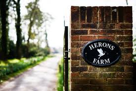 Herons Farm Wedding Photographer — Documentary Wedding ... English Country Farm Barn Home Made Wedding With Hand Sewn Touches Herons Photographer Graeme Clare Berkshire Claire James Modern Venue Blue Heron 83 Best Images On Pinterest Greenhouse Wedding High Of Naomi And Dan Laura Simon Annamarie Stepney Photography