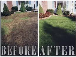 Slit Seeding (Power Seeding) Service - Lexington, Kentucky ... 25 Trending Lawn Seed Ideas On Pinterest Repair The Beer Portfolio Mowing Ferlization Treatment Pauls Best Goodbye Grass 7 Inspiring Ideas For A No Mow Backyard Artificial 12 Stunning Modern Itallations Install Balinese Garden Bali What Is Carpet How To Grow Things Consider Before Use Edging To Keep Weeds And Away From Flower Beds Hgtv Front Yard Landscape No Grass Pinteres Dwarf Mexican Feather Google Search Desert Landscape Outgrowing The Traditional Scientific American Blog Restore With Dead Soil After 9 Steps