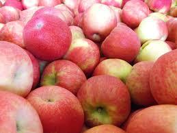 Varieties Of Pie Pumpkins by Edgewood Orchards