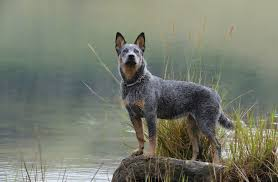 What Dog Sheds The Most by Love The Outdoors These Are The Best Dog Breeds For You