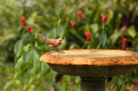 10 Common Backyard Birding Mistakes | Blain's Farm & Fleet Blog Marketplace Audubon Mason Bees Backyard Bird Shop Sibleys Birds Of The Midatlantic Southcentral States Amazoncom In Garden Wall Calendar 2018 Home Page The House Ny 97 Best Michaels Craft Store Coupons Discounts Images On Wild Fersbirdseed Blendsnature 25 Unique Birds Unlimited Ideas Pinterest Stained Glass Patterns 01557013429 Predator Guide Protect Your Yard Little Book Songs Andrea Pnington Caz