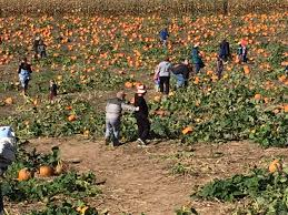 Pumpkin Patch Near Killeen Tx by Mulberry Lane Farm Temp Closed 39 Photos Pumpkin Patches