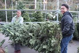 Silver Tip Christmas Tree San Jose by Piedmont Boy Scout Christmas Tree Lot Opens Nov 26