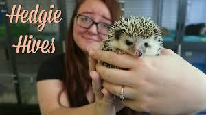 What Heat Lamp To Use For Hedgehogs by Am I Allergic To My Hedgehog Hedgie Hives Youtube