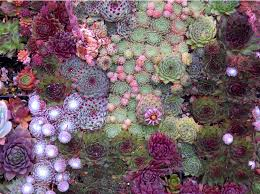 Pretty Purples And Pinks Sage Greens Form A Plant Wall Art Installation With Succulents