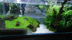 Floratic: Visiting Aquascape Paradise At Shah Alam 329 Best Aquascape Images On Pinterest Aquarium Ideas Floratic Visiting Paradise At Shah Alam Planted Aquarium Aquascape Things Aquariums Aquascaping Malaysia Diy Pertama Kali Aquascaping October 2010 Of The Month Ikebana Aquascaping World Sumida Aquarium Reloaded Fish Tanks And Designs Awesome A Moss Experiment Its All About Current Low Tech Tank Cuisine Wonderful Small Cubical Styles Planted The Surreal Submarine Amuse