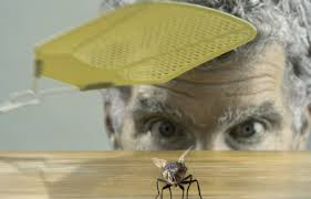 comment faire partir des moucherons dans une cuisine les mouches comment s en débarrasser tout pratique