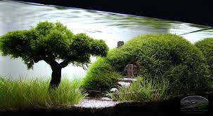 Aquascaping Our Preciousss Home Design Stirring Aquascape | Zhydoor Hamsa Wabikusa Style Aquascaping World Forum Httpwww Nature Aquarium And Aquascaping Wiki 25l Nano Capa 2011 French Aquascapers Results My Scape Iaplc Rank 70 The Passing Of Legend Takashi Amano Magazine With Nicolas Guillermin Surreal Submarine Amuse Aquascape The Month August 2010 Beyond Riccardia Chamedryfolia Question This Is Ada 2009 Susanna Aquascape Garden Bonsai Plants