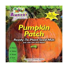 Connecticut Field Pumpkin by Amber U0027s Garden Easy Pumpkin Seed Starting Kit Pumpkin Patch The
