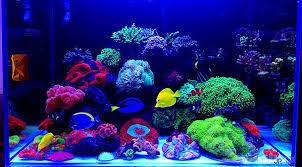 aquarium poisson prix poisson eau de mer prix poisson naturel
