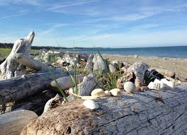 Driftwood Christmas Trees Sydney by The Wonderfully Untouched Haida Gwaii U2013 Janna Schreier Garden Design