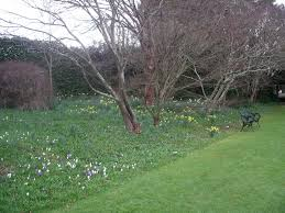 garden ideas bulbs to plant in september cheap tulip bulbs