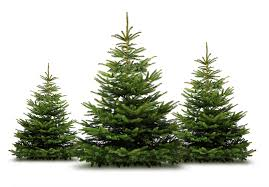 Elgin Christmas Tree Farm Facebook by Where And How To Chop Down Your Own Christmas Tree Naperville