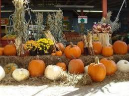 Sarasota Pumpkin Festival by Pumpkin Festival U2013 Fruitville Grove Store