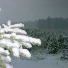 Wadsworth Ohio Christmas Tree Farm by Christmas Time Galehouse Tree Farm