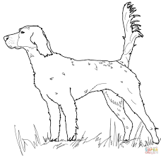 Click The English Setter Coloring Pages