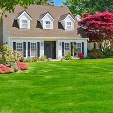 Stop Crabgrass Now Before It Takes Over Your Lawn