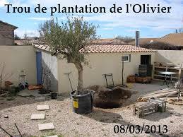 oliviers archives les jardins de dzprod