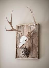 antler mounting plaque sheds elk moose deer kit ebay projects