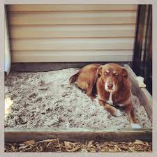 Build A Sandbox And They Will Come!!! – Thepetdoctormb.com How To Install Invisible Dog Fence Wire Youtube To Bury A Pet In 6 Simple Steps Digging Create A Sandbox Just For His Digging I Like The Build Sandbox And They Will Come Thepetdoctormbcom New Ny Law Allows People Be Buried With Pets Peoplecom Burial Funerals Malaysia Transparent Pricing Your Trusted Puppy Loves Be Buried In Sand When Pet Is Dying Owners Face Options Deputies Dig Grave Help Woman Dead Dog Two Boys Backyard Burying Bird Stock Photo Getty Images Yard That Himself Alive While Chasing Skunk Line